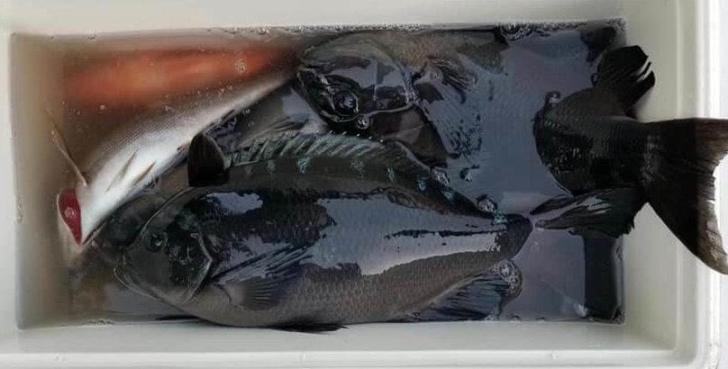 2019年12月08日(日曜日)|メジナ・グレ・クロ|静岡県 – 西伊豆 雲見|ウキフカセ|フィールドスタッフ梅木 靖三