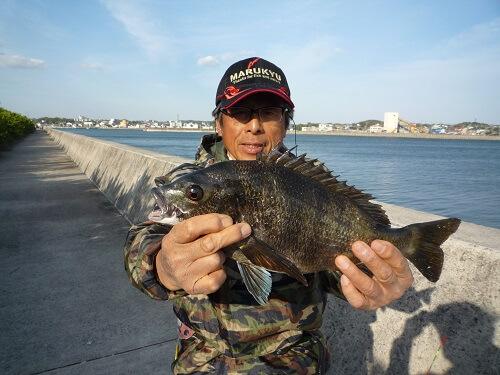 2021年04月09日(金曜日)|クロダイ・チヌ(ウキダンゴ釣り)|愛知県 – 常滑港|ウキ紀州・ダンゴ|フィールドテスター中村 輝夫